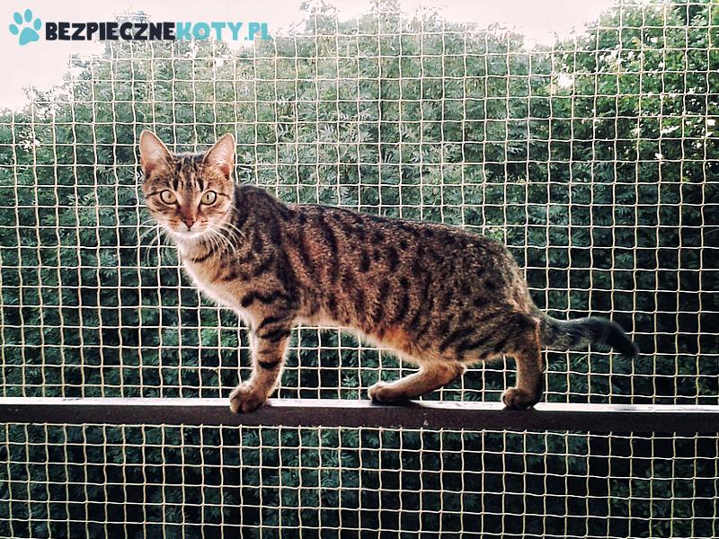 Oferta Akcja Bezpieczne Koty Siatka Dla Kota Kocia